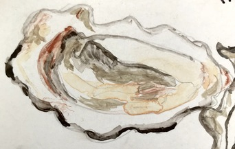 virginica oyster